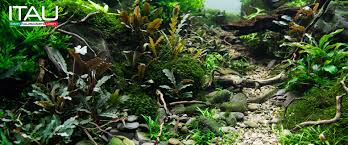 ITAU - Video Tutorial Aquascape Nature Aquarium Di Giuseppe Nisi Aquascape Of The Month June 2015 Himalayan Forest Aquascaping Interesting Driftwood Placement Aquascapes Pinterest About The Greener Side Aquascaping Design Checklist Planted Tank Forum Simons Blog Decoration Bring Nature Inside Home Ideas Downhill By Arie Raditya Aquarium 258232 Aquaria Creating With Earth Water Fire Air Space New Aquascapemarch 13 2016page 14 Page 8 Aquapetzcom Magical Youtube 386 Best Tank Images On Aquascape