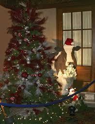 The Moo La Tree Had 4500 In Cash For Christmas Elegance 2013