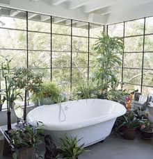 Best Pot Plant For Bathroom by 42 Best Plants U0026 Light Images On Pinterest Building Dish And