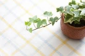 gemeiner efeu schlafzimmer pflanzen pflanzen zimmerpflanzen