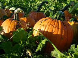Pumpkin Patch Frederick Md by Maryland Local Farm Blog Archives Page 2 Of 2 Deep Run Farms