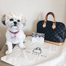 Do Morkies Shed A Lot by Simply Niki Surprises From The Lady Bag