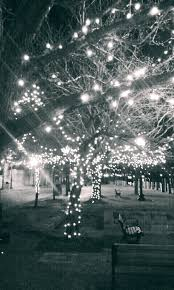 Crab Pot Christmas Trees Wilmington Nc by 157 Best Wilmington North Carolina Images On Pinterest Travel