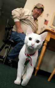 service cats service cat helps viet vet with ptsd catster