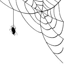 Spider Web Transparent PNG