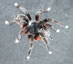 Remains Of The Day Spiders by Biomechanics Of Octopedal Locomotion Kinematic And Kinetic