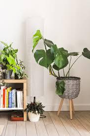 nachhaltige zimmerpflanzen erkennen und kaufen cradle magazin