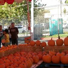 Best Pumpkin Patch Near Corona Ca by Al U0027s Christmas Trees And Pumpkin Patch Home Facebook
