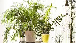 frage antwort sind pflanzen im schlafzimmer schädlich