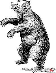 Drawn Bear Standing 9