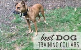 best dog shedding brush shedmonster vs furminator vs furgopet more