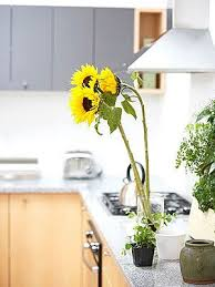Plants In Bathroom Feng Shui by Photo Gallery 10 Ways To Feng Shui Your Home