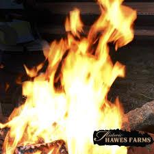 Hawes Farm Pumpkin Patch Anderson Ca by Historic Hawes Farms Kreu Facebook