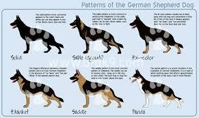 2017 belgian malinois vs german shepherd temperament info dog