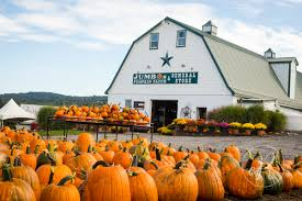 Pumpkin Patch Maryland 2017 by Jumbo U0027s Pumpkin Patch Middletown Md Opening Day 2017 Cassie