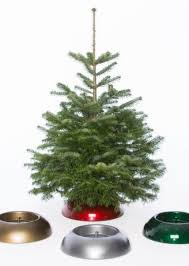 Nordmann Fir Christmas Trees Wholesale by Brinkman Nordmann Christmas Tree Wholesaler