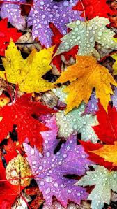 Colorful Autumn Fall Leaf Wallpaper