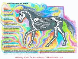 Animal Anatomy Coloring Book Project For Awesome Horse
