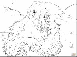 Fantastic Mountain Gorilla Coloring Page With Pages And Chima