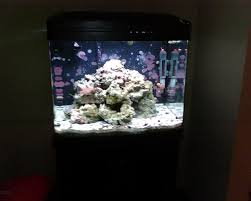 29 Gallon Biocube Aquascaping/other Pics... | Saltwaterfish Forum Home Design Aquascaping Aquarium Designs Aquascape Simple And Effective Guide On Reef Aquascaping News Reef Builders Pin By Dwells Saltwater Tank Pinterest Aquariums Quick Update New Aquascape Of The 120 Youtube Large Custom Living Coral Nyc Live Rock Set Up Idea Fish For How To A Aquarium New 30g Cube General Discussion Nanoreefcom Rockscape Drill Cement Your Gmacreef Minimalist 2reef Forum