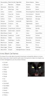 cat names black cat names popular name for your black cat