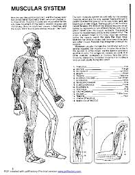 Anatomy Coloring Book For Dover