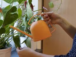 zimmerpflanzen pflege tipps für den winter