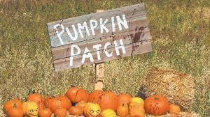 Schnepf Farms Halloween 2017 by Halloween Pumpkin Patch 2017 Phoenix Area Phoenix Az Real Estate