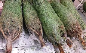 Seattle Christmas Tree Disposal by Dispose Of Artificial Christmas Tree Christmas Lights Decoration