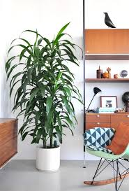 Best Plant For Your Bathroom by Plants For Your New Baby U0027s Nursery Spider Plant And Jade Plant