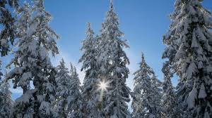 Popular Christmas Tree Species by Holiday Tips Don U0027t Spread Forest Pests With Your Christmas Tree