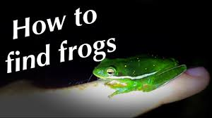 How To Find Frogs - YouTube Ohios 15 Species Of Frogs And Toads At A Glance Trekohio 13 Illinois Toads Frogs Midwestern Plants A Container Pond To Host Fish I Want Make One With How Raise Pictures Wikihow Utah Division Wildlife Rources Focus On Long Legged Cute Sitting Couple Cartoon Style Garden The Frog Pond Coach Michele Motorbike Frog Wikipedia Shop 145in Statue Lowescom
