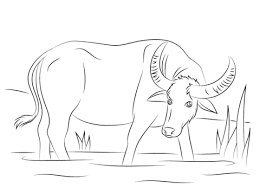 Click To See Printable Version Of Water Buffalo Coloring Page