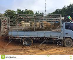 Cow On A Jail Truck In Livestock Market At Subburb In Thailand Stock ... Overturned Cow Trailer Multiple Car Accidents Bring Birminghams Cow Truckin 2013 Youtube 03549 116 Scania Rseries Cattle Transport Truck With Action Toys Amazoncom Toy State Road Rippers Rumble Animal Popup Trailer Fire Kills Closes Highway 151 In Dodge County Jgcreatives Portfolio Of Jonathan Greer The Happy Bruder Transportation Including 1 Only 3380 Dayun 42 Dry Box Stake Cheap Trucks Buy Trucks 2 Sweet Ice Cream Boulder Food Roaming Hunger Say Farewell To Tipping Creamerys Eater Austin