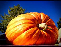 Ohio Pumpkin Festival by Pumpkin Weigh Off Sept 30th Siegel U0027s Pumpkin Farm