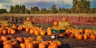 North Plains Pumpkin Patch by 12 Missouri Pumpkin Patches That Will Make You Ready For Fall