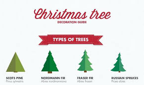 Christmas Trees Types by Christmas Tree Decoration Guide Infographic Visualistan