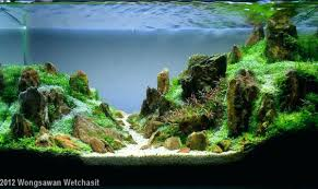 Rent Apartment Munich Per Day Tag: Rent Appartment Munich. 66 Gallon Bookshelf Aquarium The Planted Tank Forum Shop Pond Pumps At Lowescom Kate Will Polywood Fniture 28 Images 174 Shd19 Seashell Grillo Rugs Soumac 8019 Rug Outlet And Care Home Theater Decorations D 233 Cor Garden Shed 6 X 3 Keter Plastic Wooden Aquascape World Standard Rating In The Repair Renovation Service Contractors Contractor Aquascapes Owensboro Ky Homedesignpicturewin