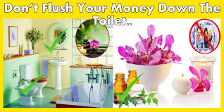 Plants In Bathroom Good For Feng Shui by 22 Best Feng Shui Do U0027s And Dont U0027s For Your Bathroom Web Feed 360