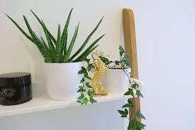 12 badezimmer pflanzen die besten badpflanzen überblick
