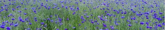 chambre agriculture du tarn plantes à parfum aromatiques et médicinales chambre d