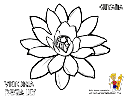 Guyana Victoria Lily Flower Printout At YesColoring