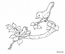 Mother Baby Bird Coloring Page Pitara Kids Network Big Pages Animal