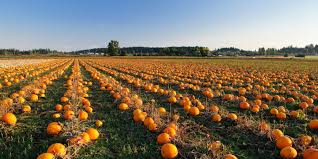Best Pumpkin Desserts Nyc by Best Pumpkin Patches Near Me In Nyc Top 6 Farms For Pumpkin