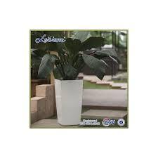 pot bonsai grande taille grossiste pot bonsai grande taille acheter les meilleurs pot