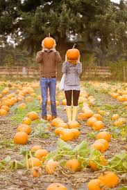 Pumpkin Patch Massachusetts by Cuddle Up In A Cozy Blanket 9 Perfect Fall Date American
