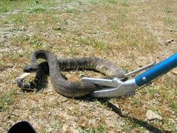 How To Get Rid Of Snakes - Snake Control & Removal Diamondback Water Snake Indiana 1 Yard Long Youtube Snake Trap Cahaba Ewww Snakes 6 Tips To Keep Them Away From Your Home How A 14 Steps With Pictures Wikihow In The Duck House 9 Tips Help Repel Snakes Fresh Eggs Best Way Ive Found Yet Deal Problems Backyard Removal Wildlife Services Of South Florida Catch Deadly Safely Out Louisiana Department And Fisheries