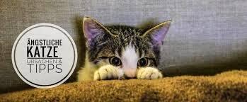 ᐅ ängstliche katze ursachen tipps zum angst nehmen