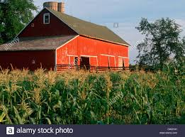 Green Corn Fields And Red Barn In Indiana Stock Photo, Royalty ... Red Barn Green Roof Blue Sky Stock Photo Image 58492074 What Color Is This Bay Packers Barn Minnesota Prairie Roots Pfun Tx Long Bigstock With Tin Photos A Stately Mikki Senkarik At Outlook Farm Wedding Maine Boston 1097 Best Old Barns Images On Pinterest Country Barns Photograph The Palouse Or Anywhere Really Tips From Pros Vermont Weddings 37654909