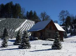 Eustis Christmas Tree Farm by The Best Christmas Tree Farms For Date Night Jollies